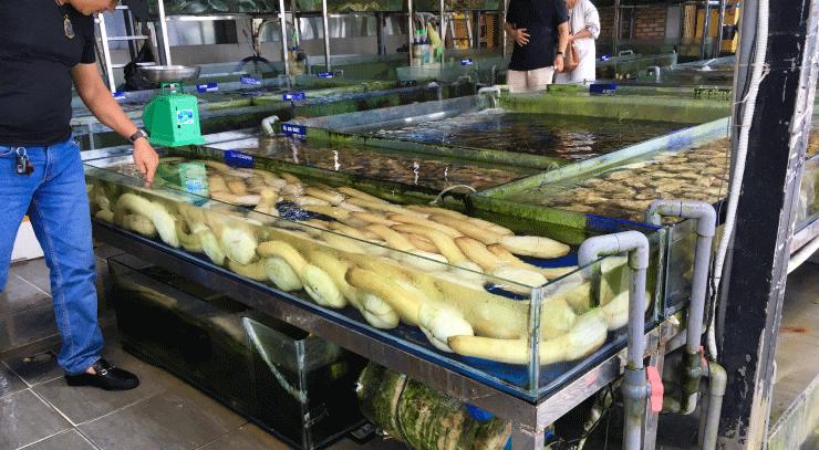 ベトナム、ダナンのニーケビーチ付近の海鮮レストランの貝