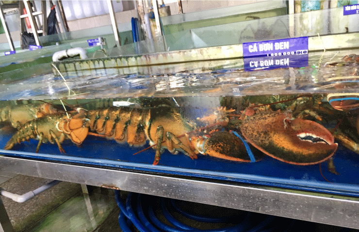 ベトナム、ダナンのニーケビーチ付近の海鮮レストランのロブスター